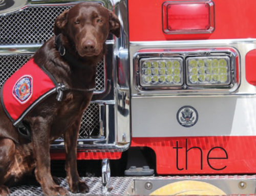 AKC Magazine: Peer support dogs and The Firehouse Project