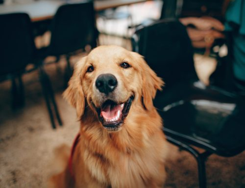 Five Best Dog Breeds For Families